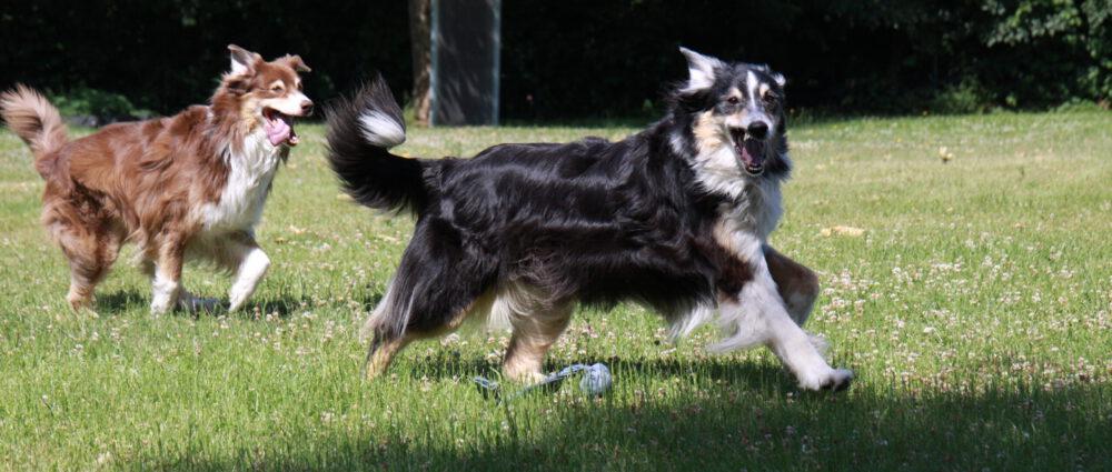Hundefreunde-Blatzheim